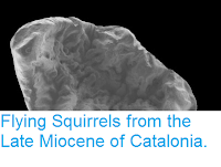 https://sciencythoughts.blogspot.com/2015/05/flying-squirrels-from-late-miocene-of.html