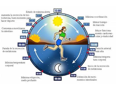 Nuestro reloj biológico se sincroniza diariamente con la luz