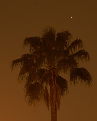 Venus and Jupiter conjunction and the tall palm tree