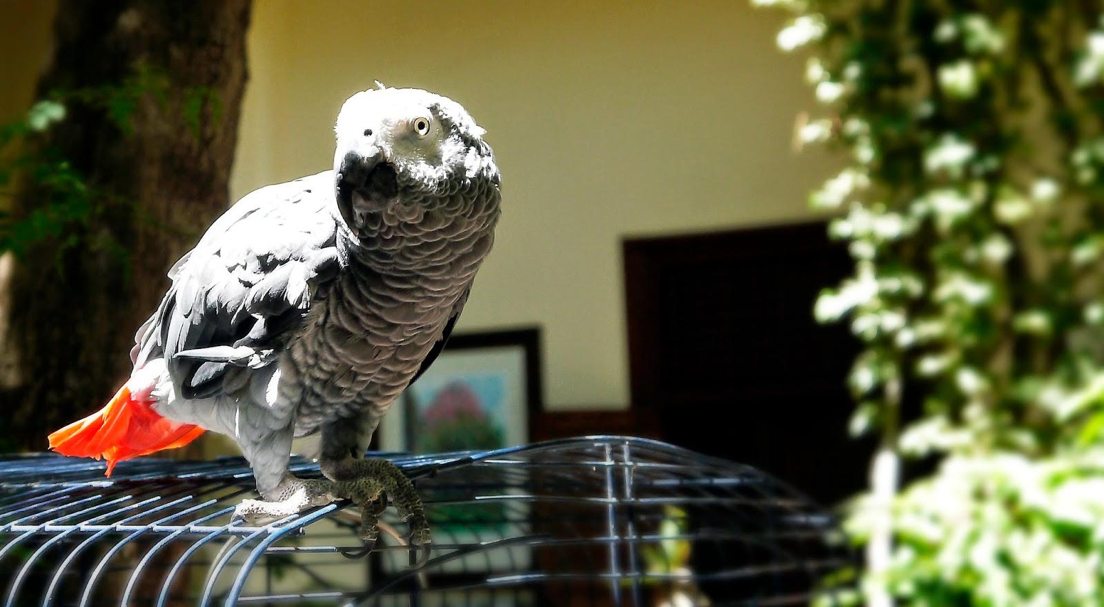 Parrot Riad Noga Marrakesh