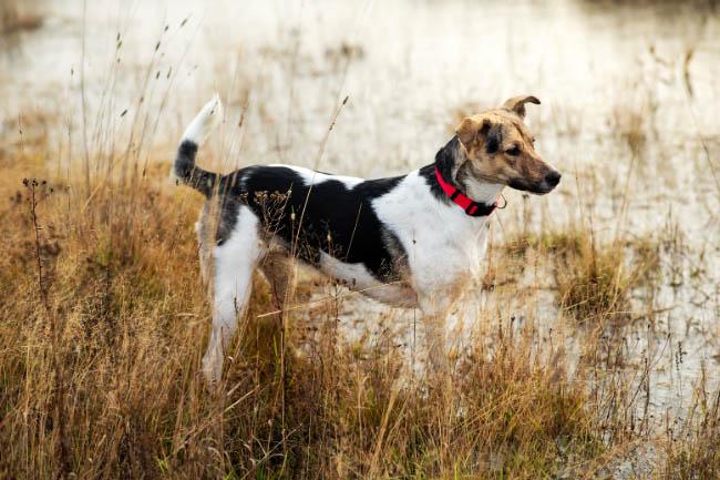 Jak zadbać o bezpieczeństwo psa nad wodą?