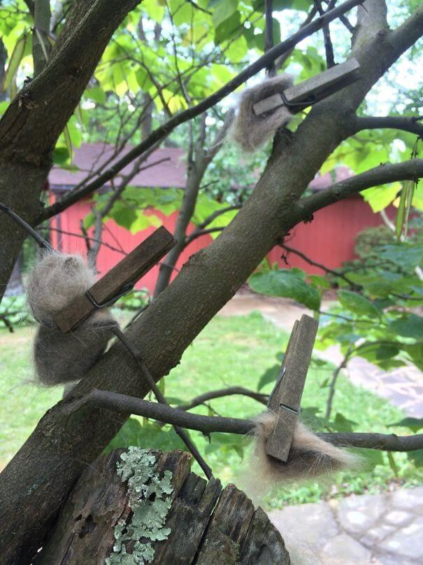 20 Hilarious Photos Of Grandparents Being Awesome - My Grandma Pins Cat Hair To Trees So That Birds Can Make Luxury Nests