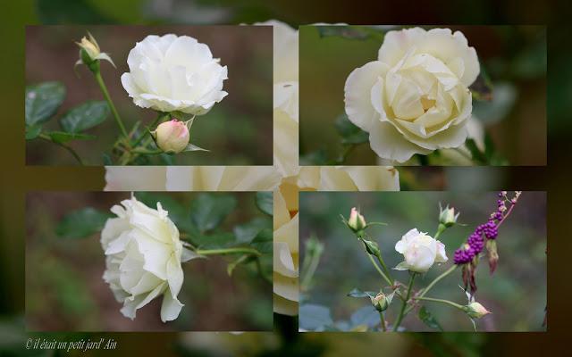rosier crystalline valérie swane blanc