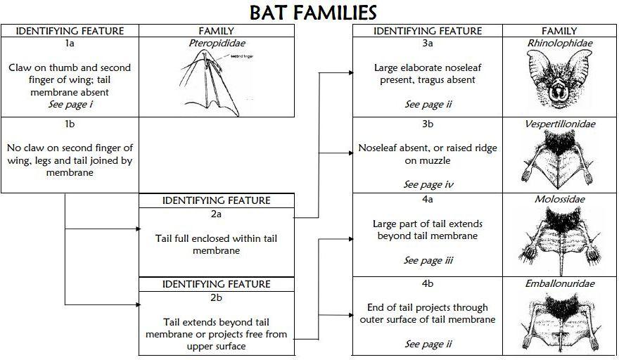 Identifying bats in south east Queensland AU | BATS RULE