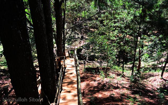 Menyusuri pepohonan Pinus Mangunan