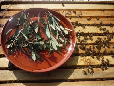 Τροφοδοσία των μελισσιών! Πότε; πως; και γιατί γίνεται!