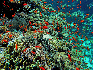 Sebutkan 10 Hasil Laut Yang Kamu Ketahui?
