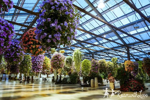 Kobe,โกเบ,สเต็ค,บ้านฝรั่ง,รีวิว,เที่ยว,ญี่ปุ่น,สวีท,ความรัก,kachoen,bird,garden,ดอกไม้