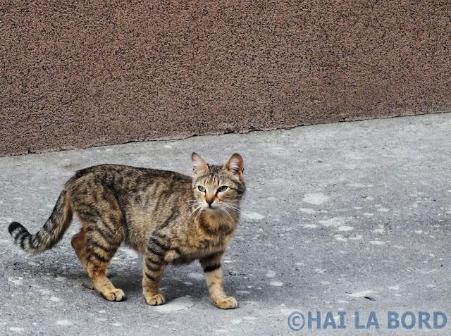 pisica pe strada georgescu mihail bucuresti