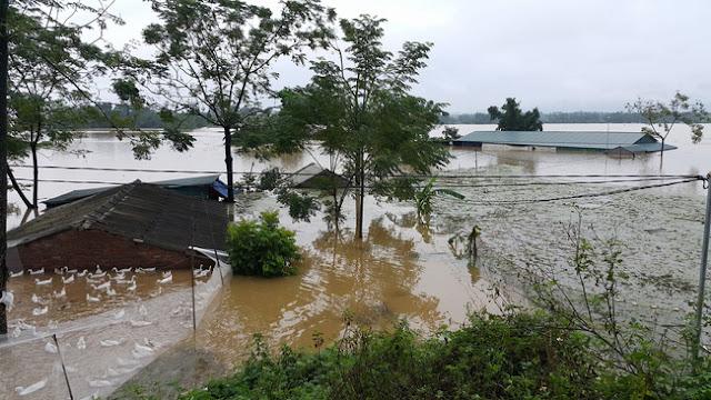 Đức Phổ: Người đàn ông bị điện giật tử vong khi đang chăm sóc đàn vịt trong mưa lũ
