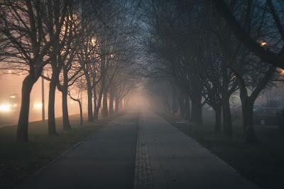 Camino con arboles alrededor de noche