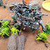 What's On Your Table: Three Headed Beast vs Orks