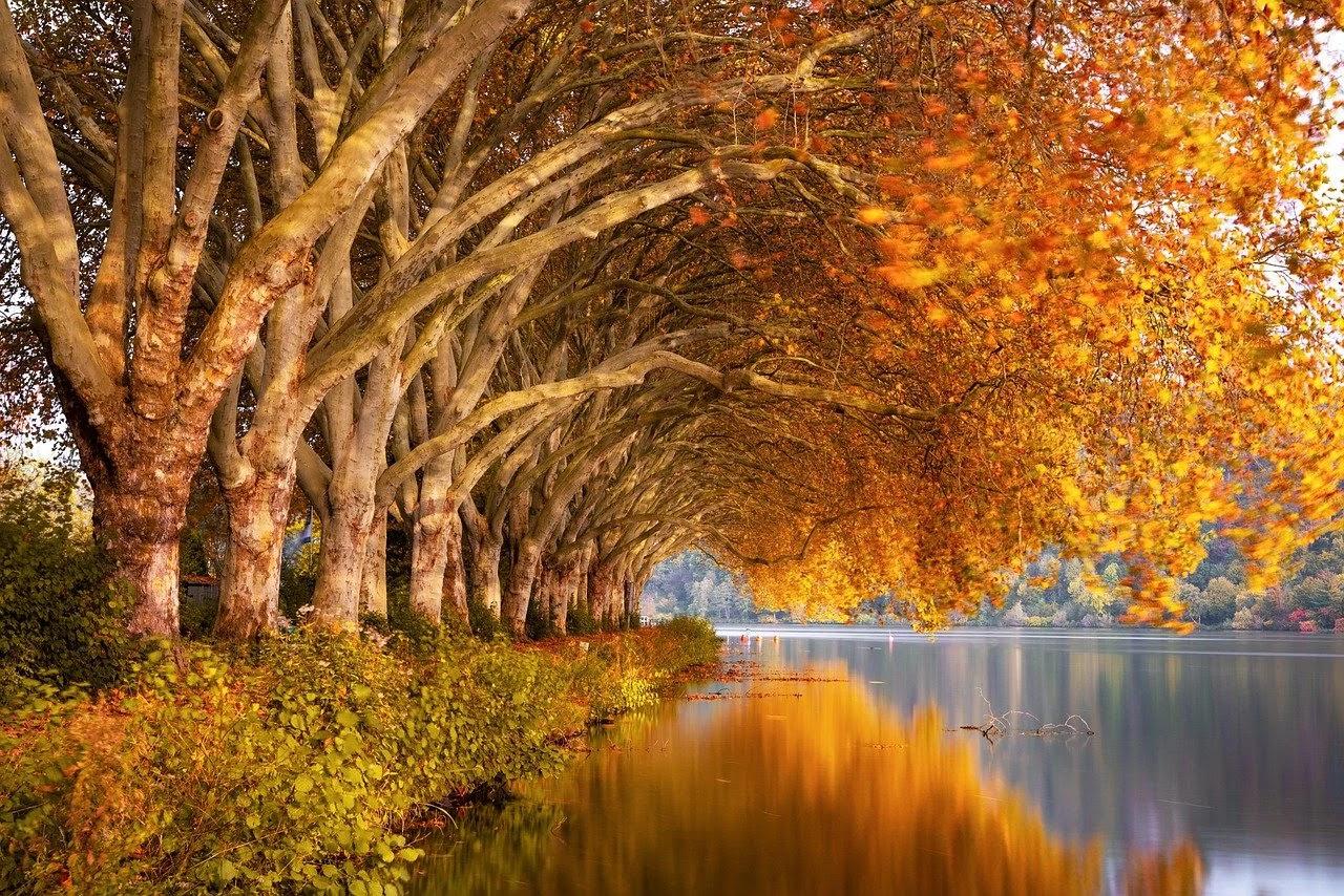 صورة نهر