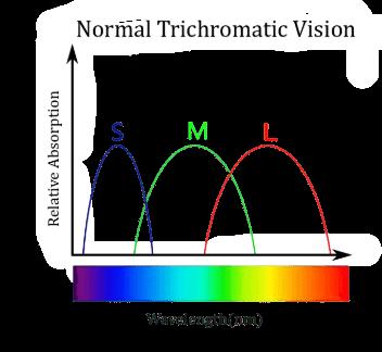 Online Colour Blindness Test Free , Trichromatic Vision, S- cones , M-cones, L-cones