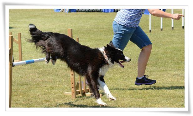 free dog training tips online