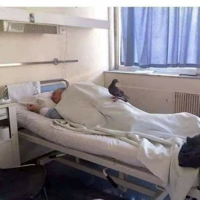 "This image from the web features an elderly man in a hospital bed laying on his side. A pigeon is sitting on his blanket.  Supposedly ""the nurse who took this photo said the following: 'This elderly patient was admitted to the hospital 3 days ago and during those 3 days no family members came to visit or take care of him. The nurse who took this photo said that a pigeon 🕊 came 2 days ago and stayed in his bed for a long time ..'. Later it was learned that he always fed the pigeon when he was sitting on the bench in the park near the hospital …"" This uncredited image is from the web @ https://www.facebook.com/143352986168049/photos/a.190298741473473/990599838110022/?type=3&theater"
