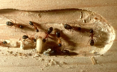 Home Pest Control: The Difference Between Ants and Termites