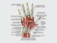 Повреждение сухожилий сгибателей и разгибателей пальцев кисти (Травма кисти г. Харьков)