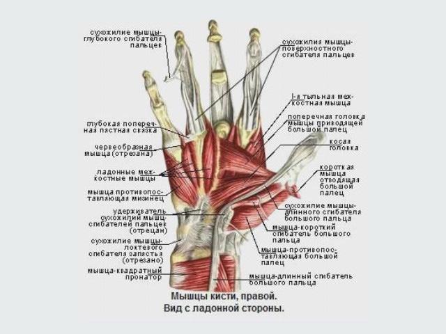 В каких случаях должна применяться хирургия кисти?