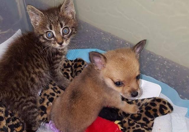 Друг в беде не бросит: маленький котенок спас щеночка теперь они не разлей вода