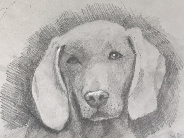 Daily Art 07-30-2018 sketch of weimaraner on grey toned paper