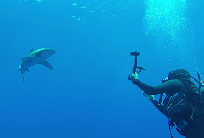 Buceo Aranjuez Mar Rojo Tiburones