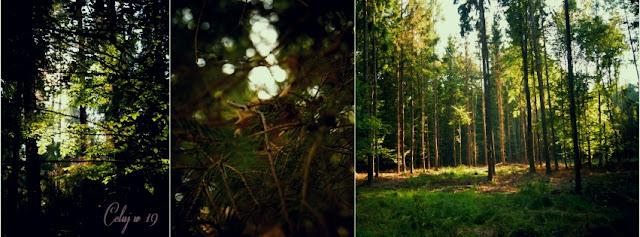 las, jesień, zieleń, słońce