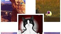 Máy tính thêm sinh động với bộ sưu tập vật nuôi trên Desktop