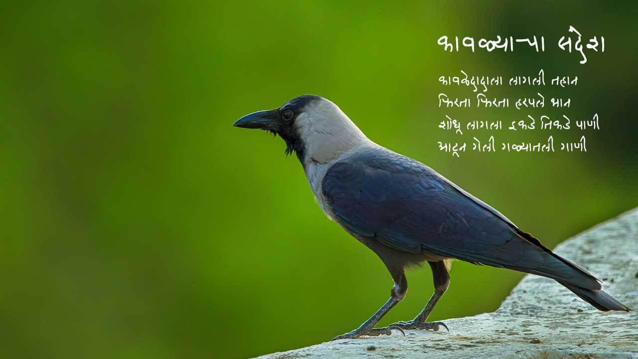 कावळ्याचा संदेश - मराठी कविता | Kavalyacha Sandesh - Marathi Kavita