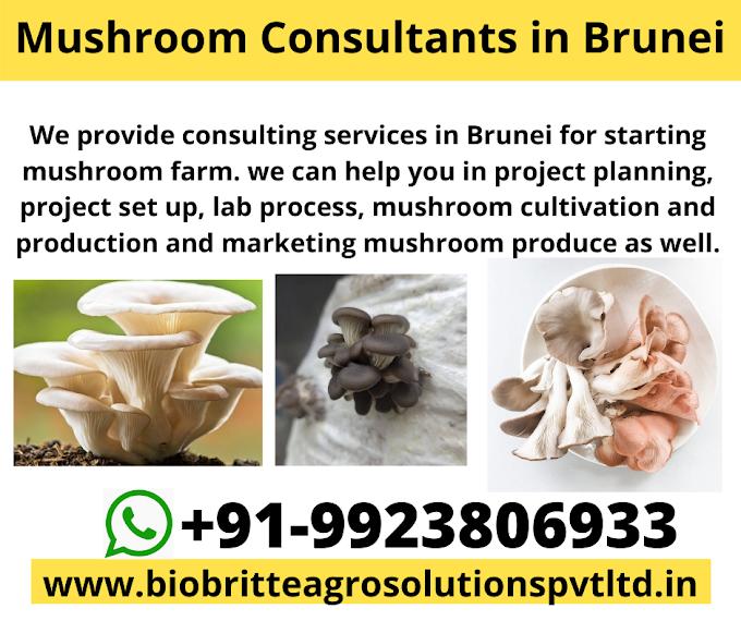 Mushroom Consultants in Brunei Darussalam | Mushroom Farm in Brunei Darussalam