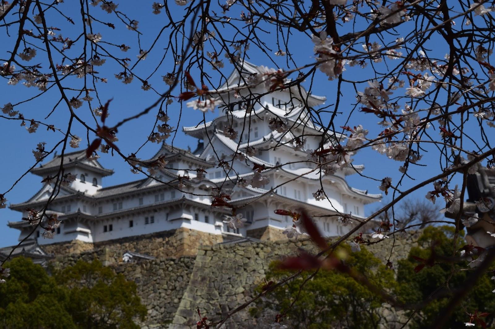 Himeji Castle and Sakura