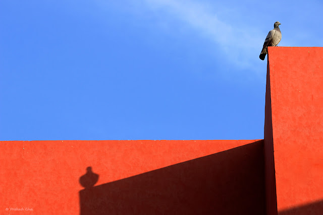A Photo of a Pigeon sitting high up on a Red wall with his shadow being casted behind hime. Shot Location: Jawahar Kala Kendra Jaipur, India