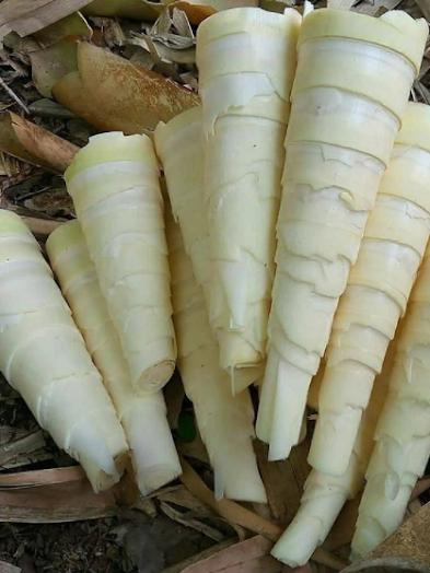 rebung-bambu-temen