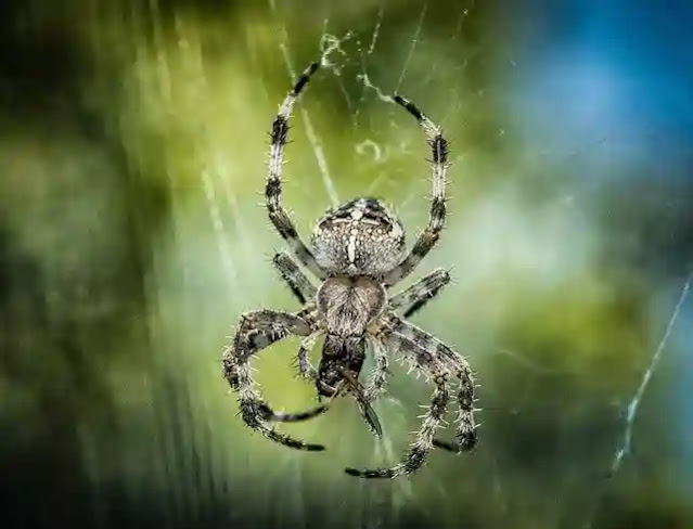 120 Information & Facts About Spiders In Hindi