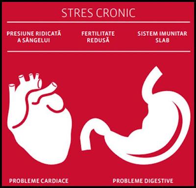 top cele mai bune suplimente naturale stres
