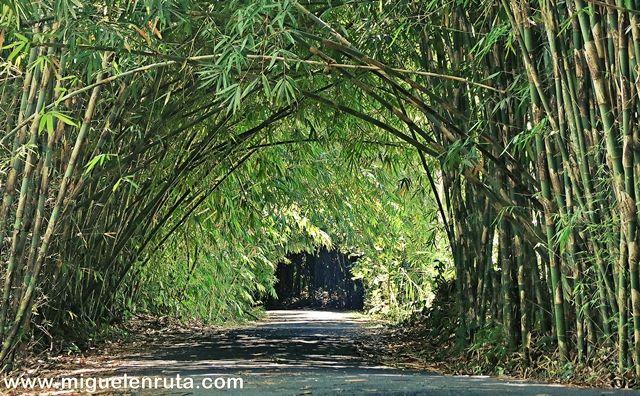 Bamboo-Forest-Penglipuran-Bali
