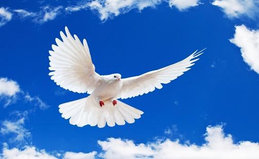 Mensagem de Paz