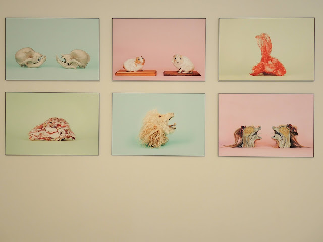 """Gent: designmuseum: """"Dieren op maat"""""""