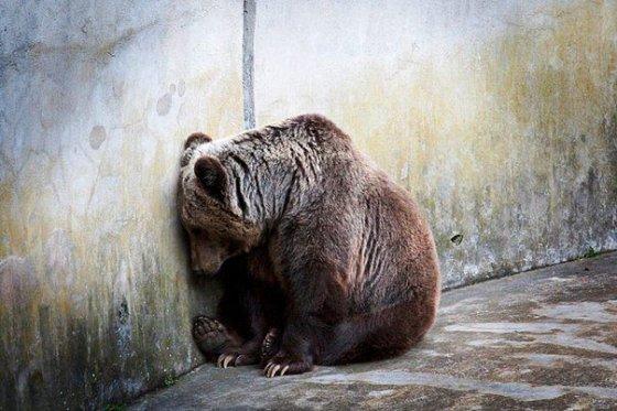 Зоопарк - тюремный приговор на всю жизнь!!!