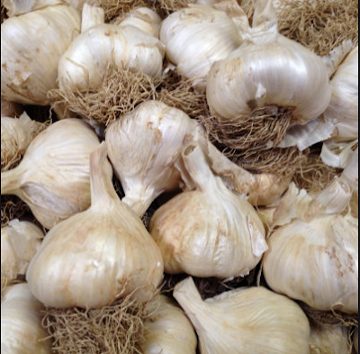 Solent Wight Garlic by Simply Seed  (A Stubborn Optimist - an ecotherapy blog by Carrie Gault 2019)
