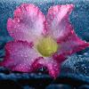 Hình nền mưa buồn và tâm trạng tuyệt đẹp cho người thất tình xemanhdep.net