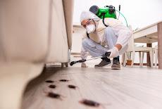 شركة مكافحة حشرات بتبوك (( للايجار 01063997733)) رش مبيدات ابادة فورية للحشرات الزاحفة والطائرة فى تبوك