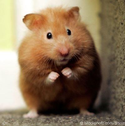 harga pasir zeolit hamster, [pasir zeolit hamster], [pasir zeolit untuk hamster]