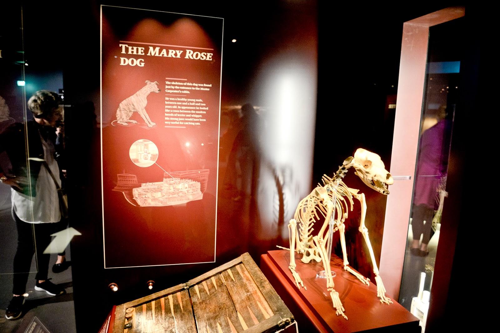 the mary rose, tudor warship, the mary rose dog,