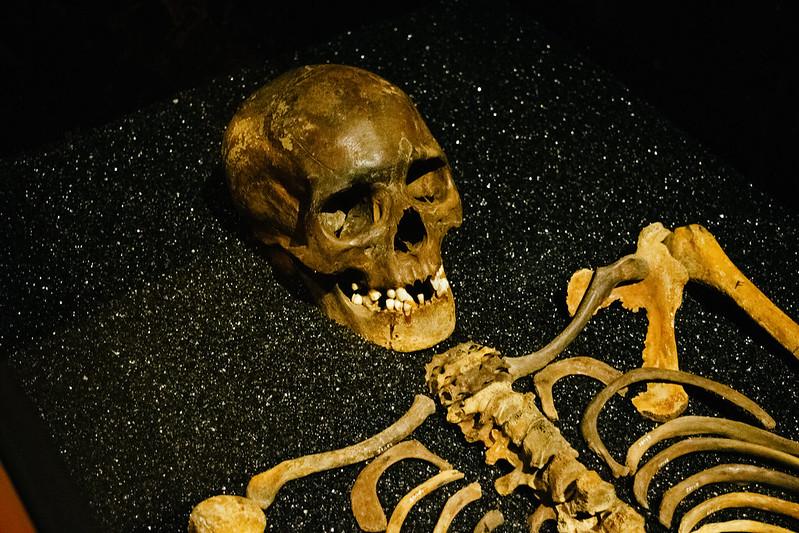 vasa museum skeleton