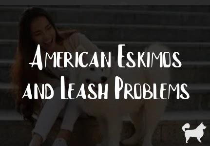 American Eskimos and Leash Problems