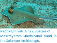 https://sciencythoughts.blogspot.com/2017/12/neotrygon-vali-new-species-of-maskray.html