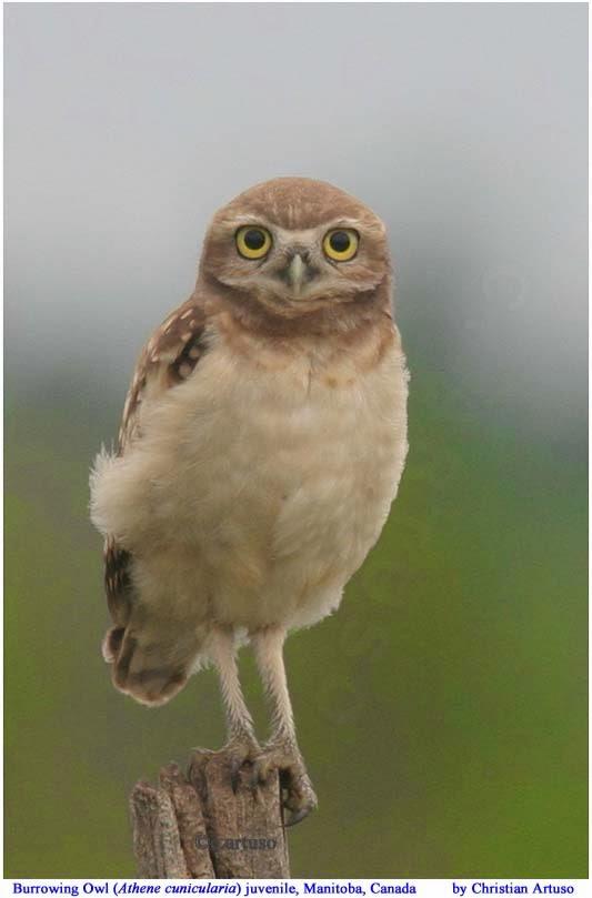 Christian Artuso: Birds, Wildlife: 4th International ... - photo#3