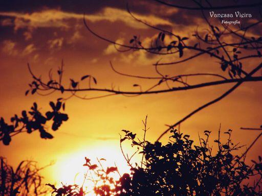 Por do sol, poemas, poesias, versos, Vanessa Vieira, fotografia, literatura, Nós poéticos e Literários,