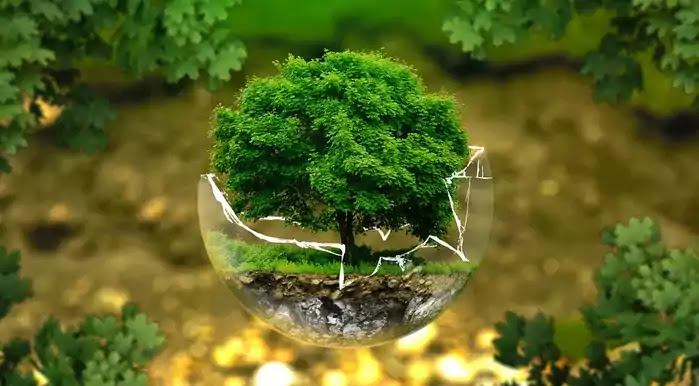 World Environment Day (WED) 5 June